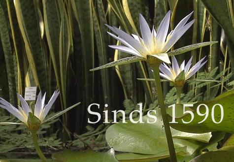 Videoclip voor de Hortus botanicus van de Universiteit Leiden