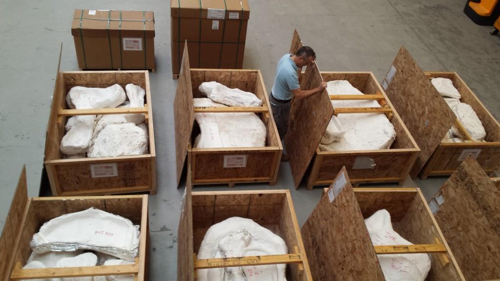 Eerste botten triceratops arriveren bij Naturalis